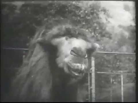 Vitalis Commercial (1960s)