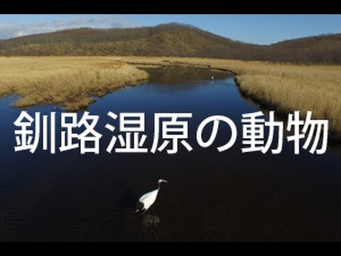 釧路湿原の動物 by bird's-eye view on YouTube