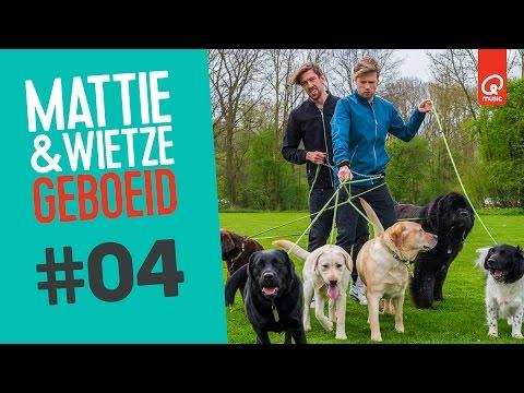 IN DE KNOOP MET 8 HONDEN // Mattie & Wietze Geboeid
