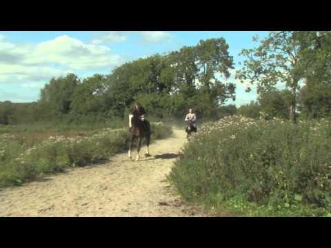 Lynchs Gang The fastest Donkey in Ireland