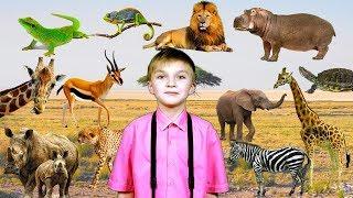 Животные Африки увлекательная подборка для детей