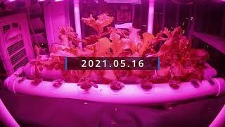 베란다 수경재배 2021.05.16