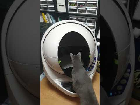 My cats reacting to Litter Robot 3 (self-cleaning litter box)