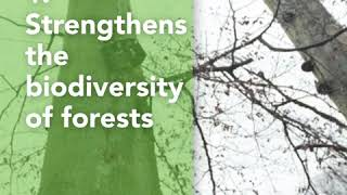 Forest Biodiversity Campaign