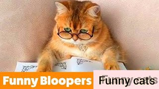 Cute and funny cat's videos from tiktok