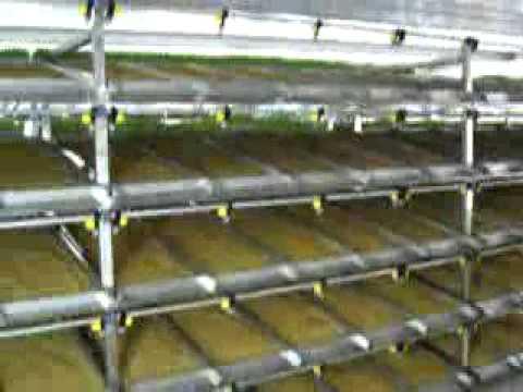 Fvh forraje verde hidroponico hgf hydroponic green fodder for Construccion de viveros caseros