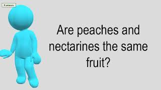 Are Peaches And Nectarines The Same Fruit?