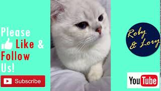 My Fat Cat Is Sleepy Cute Kitten Funny Video