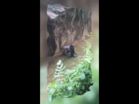 Cincinnati zoo kills gorilla to save boy who fell into enclosure HD Original 1