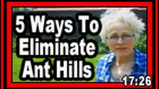 5 Ways To Eliminate Ant Hills - Wisconsin Garden Video Blog 598