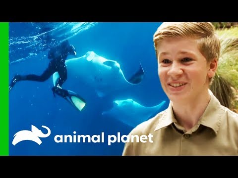 Robert Irwin's Best Moments From Season 1 | Crikey! It's The Irwins