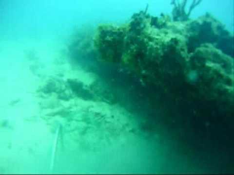 Lobster Attacks Diver 2
