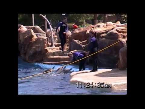 Dolphin Show Sea World San Diego