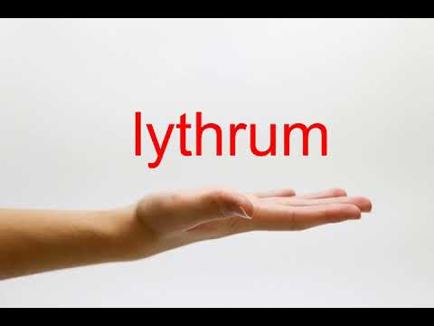 How to Pronounce lythrum - American English