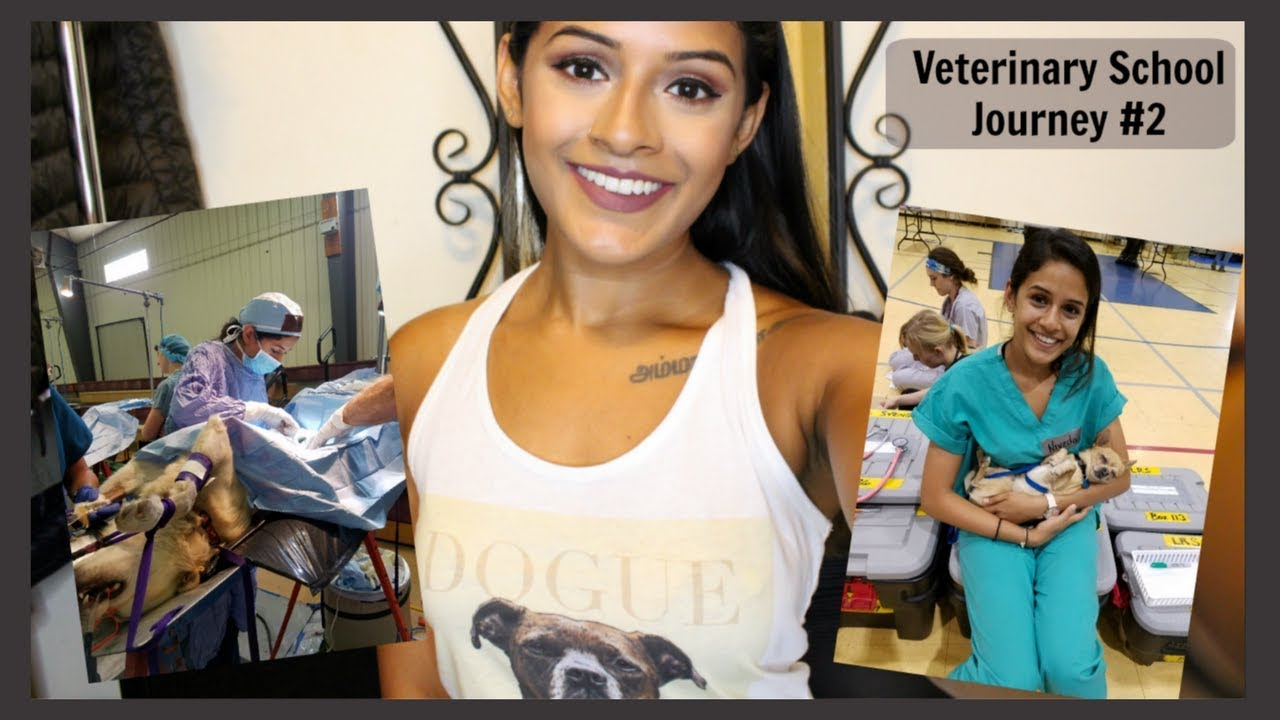 Veterinary School What To Expect Is It Hard Youtube