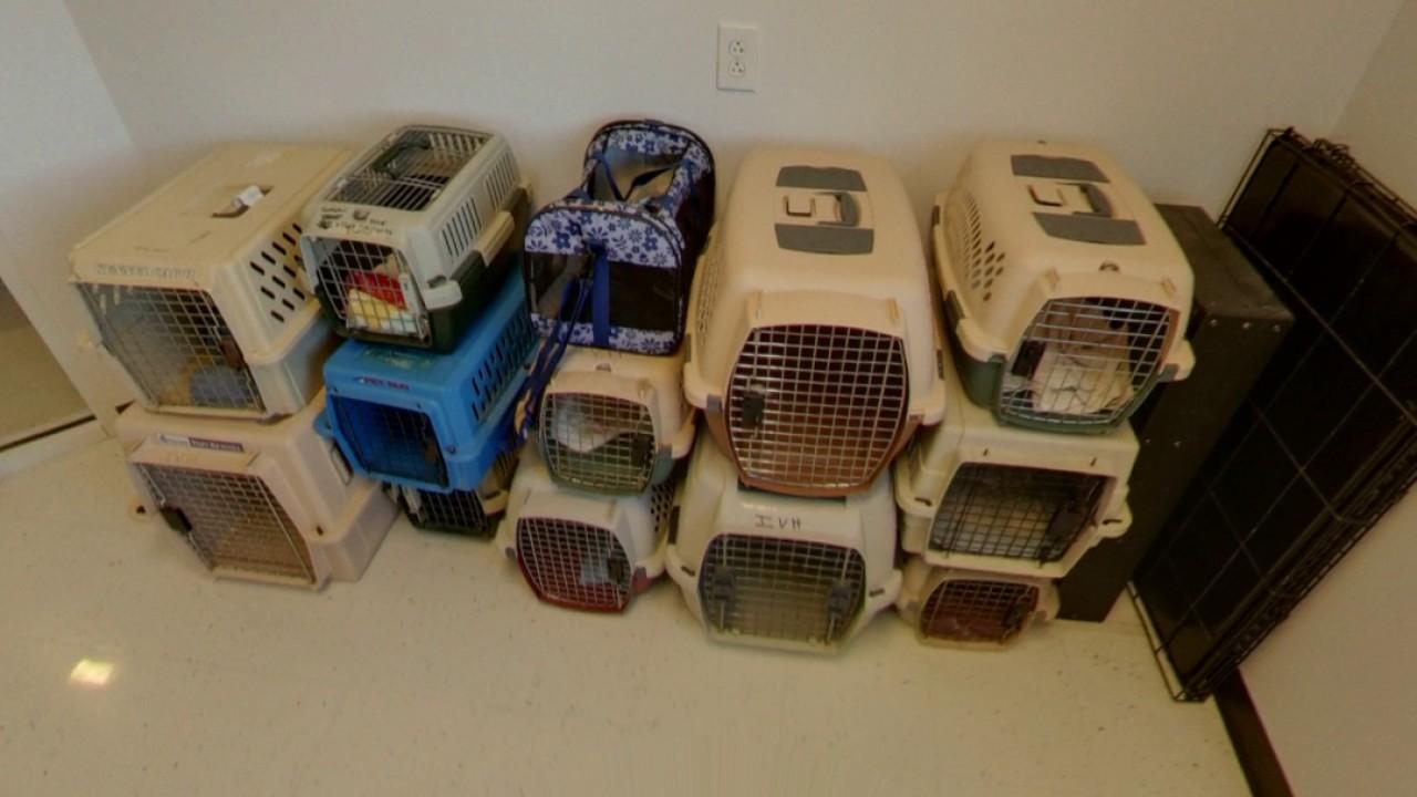 Ideal Veterinary Hospital | Oak Ridge, TN | Veterinary Care