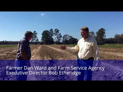 Farm Service Agency Director tours Bladen farms; losses expected to be hundreds of millions