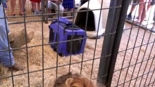 Snake Farm, New Braunfels, TX