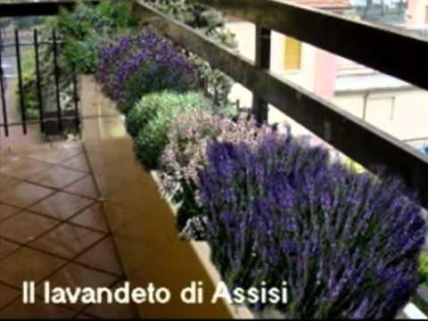 Progettare giardino e terrazzo; realizzare un\' aiuola - YouTube
