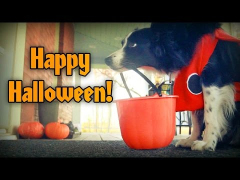 Happy Halloween from NanaBorderCollie!