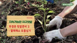 열매채소 동반작물 모종심기(토마토와 바질, 고추, 가지…