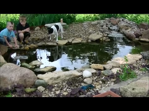 Mosquito control adding goldfish to koi pond youtube for Koi pond removal