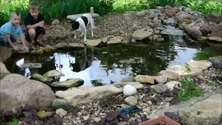 Mosquito Control Adding GoldFish to Koi Pond