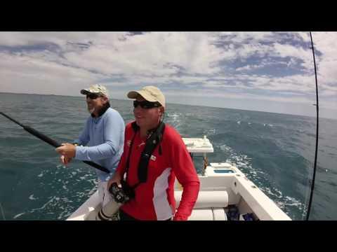 Bait 'n Switch Black Marlin Hervey Bay