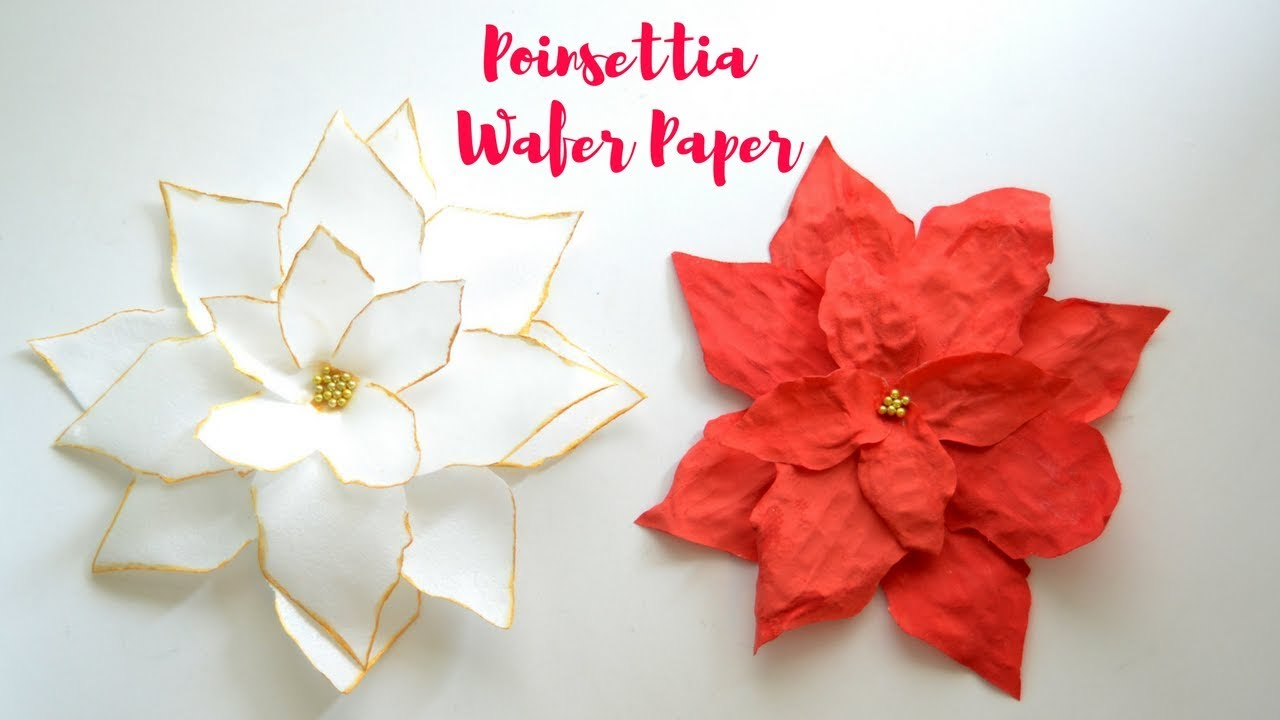 Wafer Paper Poinsettia Tutorial - Coloring Wafer paper - YouTube