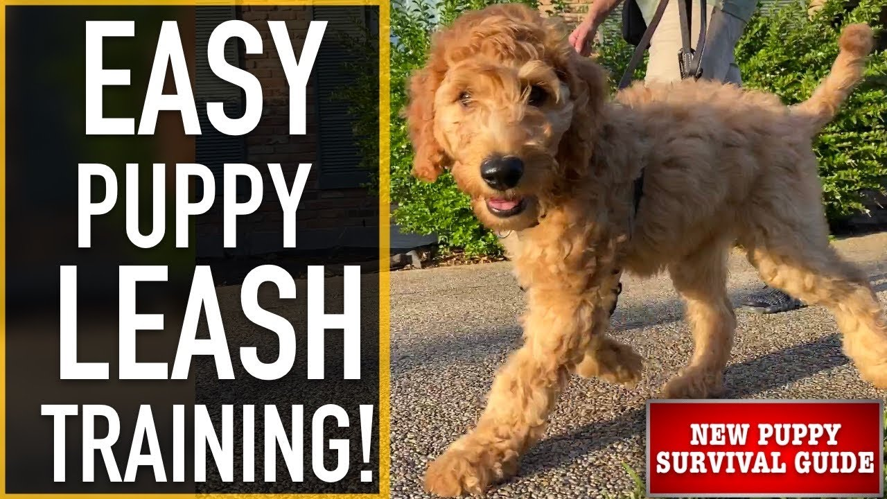 Download NEW PUPPY SURVIVAL GUIDE: How To Leash Train Your Puppy! (EP: 9)