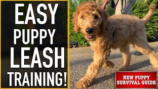 NEW PUPPY SURVIVAL GUIDE: How To Leash Train Your Puppy! (EP: 9)