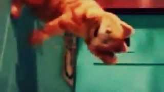 Garfield   Karnuma Vurdular Karnm Aro D