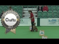 Obedience - Inter-Regional Rally Level 2 - Part 4 | Crufts 2017