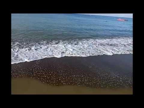 Фермер Бурундук в Maritim Pine Beach Resort -  5 звезд!