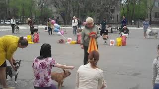 Выставка собак в Благовещенске 19 мая 2019г. BESTы 2 группы, юниоров, и выбор лучших собак выставки.