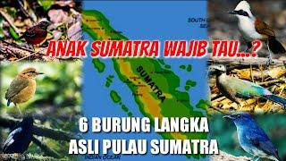 Inilah 6 BURUNG LANGKA Asli Pulau Sumatra - Burung Langka Hampir Punah di Indonesia