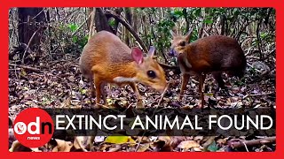 'Extinct' Mouse Deer Caught on Camera in Vietnam After 30 Years