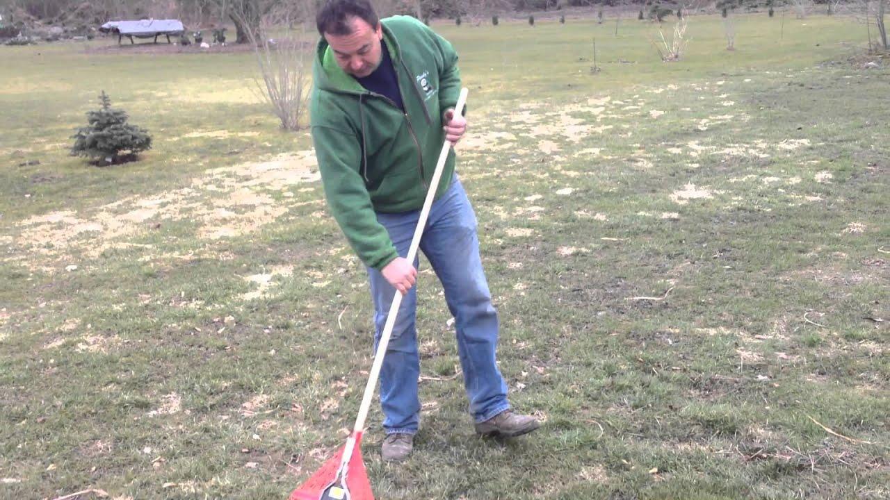 Snow Mold Solutions Pandy 39 S Garden Center The No B S Gardener Youtube