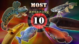 Najbardziej NIESAMOWITE, zadziwiające i oryginalne RYBY akwariowe.