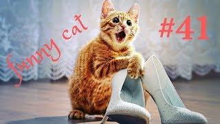 ПРИКОЛЫ С КОТАМИ  смешные коты  2019 СМЕШНЫЕ ЖИВОТНЫЕ оригинальная озвучка