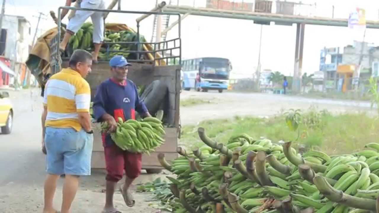 Natural Resources Of Ecuador