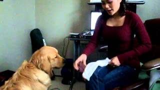 How To Dog Tricks: Teach Your Dog Take Off Your Socks