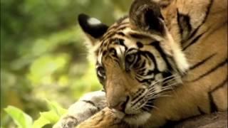 Суперсооружения древности  Мачу Пикчу Документальные фильмы National Geographic HD