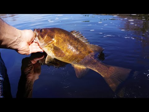 River Fishing For BIG Smallies | Wisconsin River (Insane Action)
