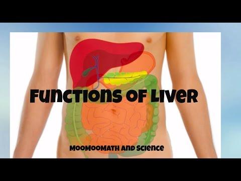 Concerning the Liver