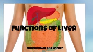 Main functions of the Liver- Why the liver is important?