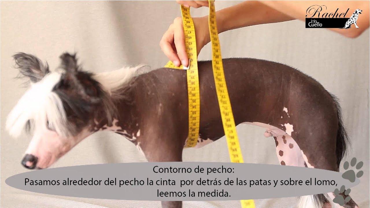 medidas / tallaje de ropa para perros rachelbylolacuello - YouTube