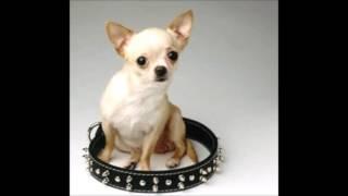 Baixar school presentatie honden+rassen