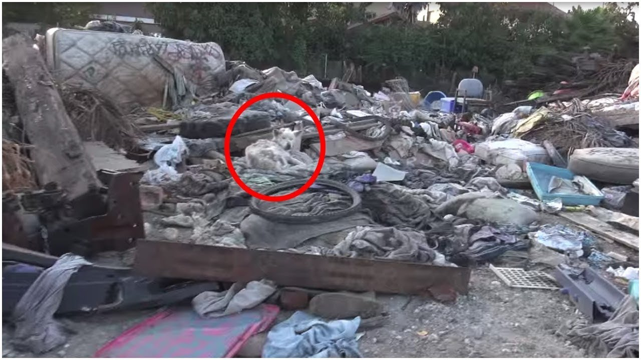 they-found-this-terrified-stray-living-in-a-trash-pile-but-one-year-on-she-s-totally-transformed