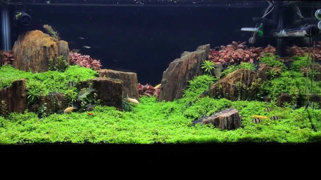 Colorado Inspired Aquascape (1 Month) - YouTube